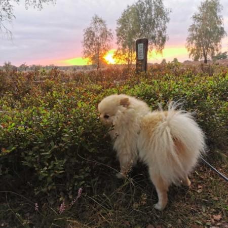Buddy in den Heidelbeeren